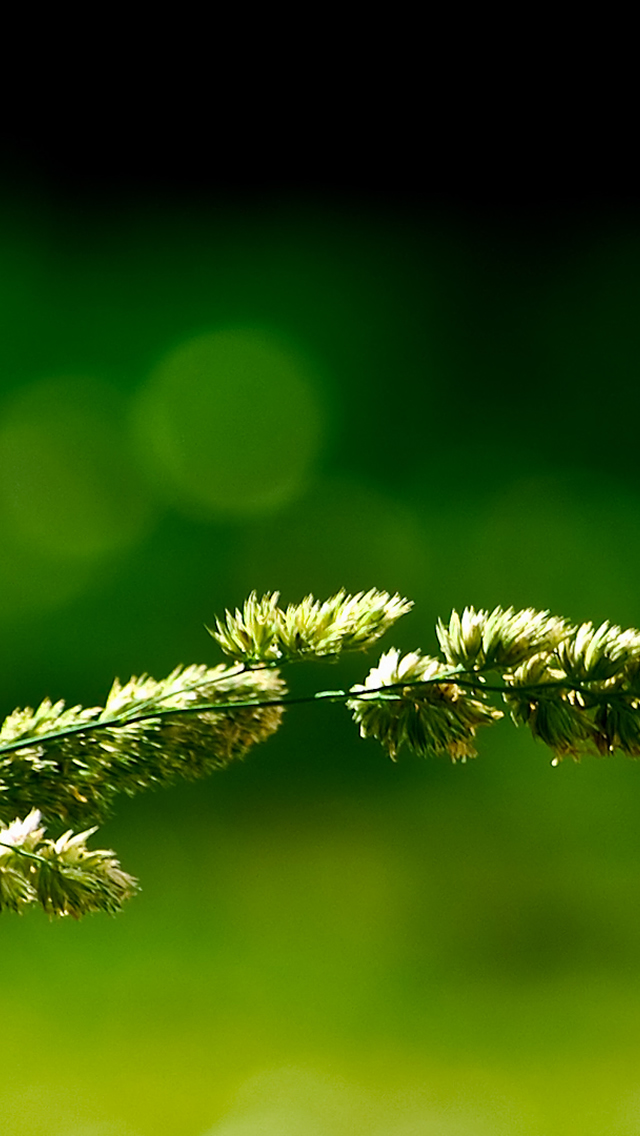 nature wallpaper iphone green