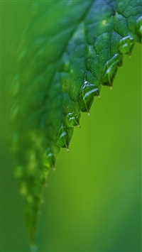 raindrops on a green leaf iPhone 5s wallpaper