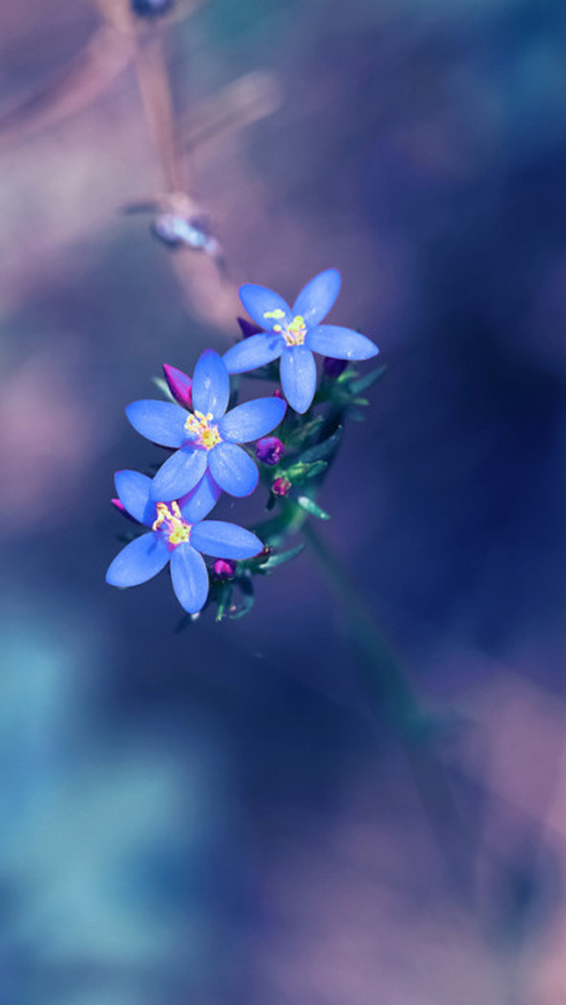 Small fresh blue flowers iPhone wallpaper