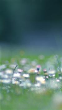 Dandelion Seedhead Isle Of Wight iPhone 5s wallpaper
