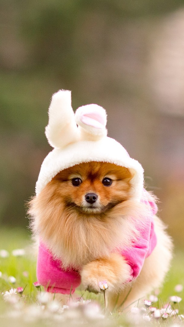 Cute Doggy Iphone Wallpapers Free Download