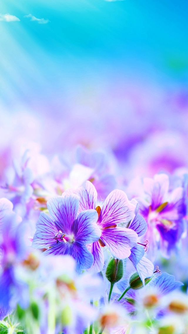 Purple Flowers iPhone wallpaper