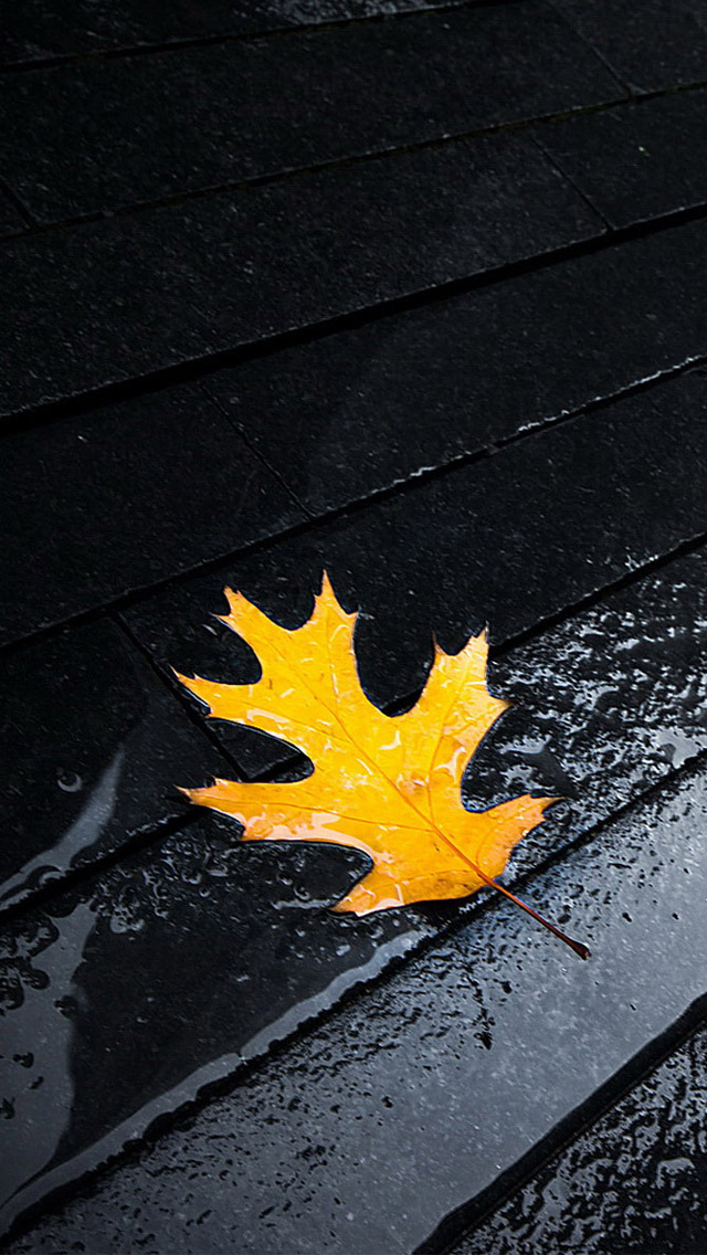 Yellow Leaves Iphone Wallpapers Free Download