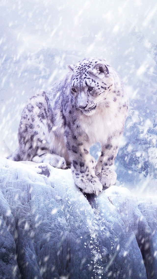 Leopards In The Snow iPhone wallpaper