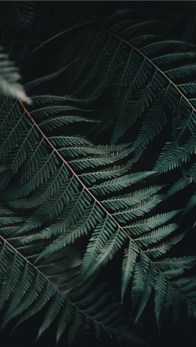 Amongst the Ferns iPhone wallpaper