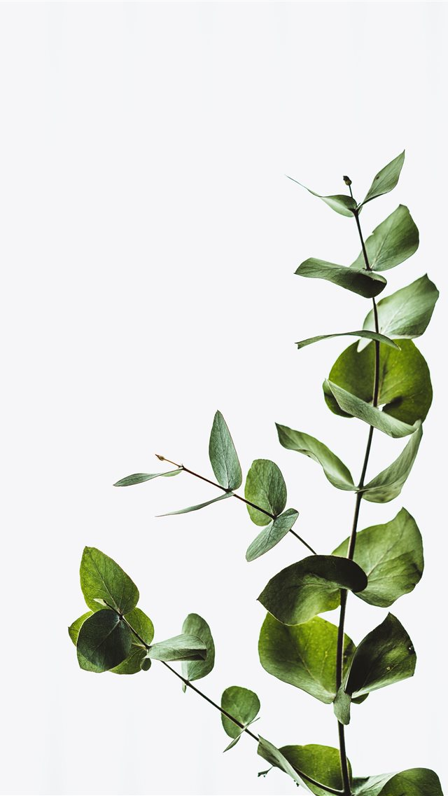 Minimal eucalyptus leaves iPhone wallpaper