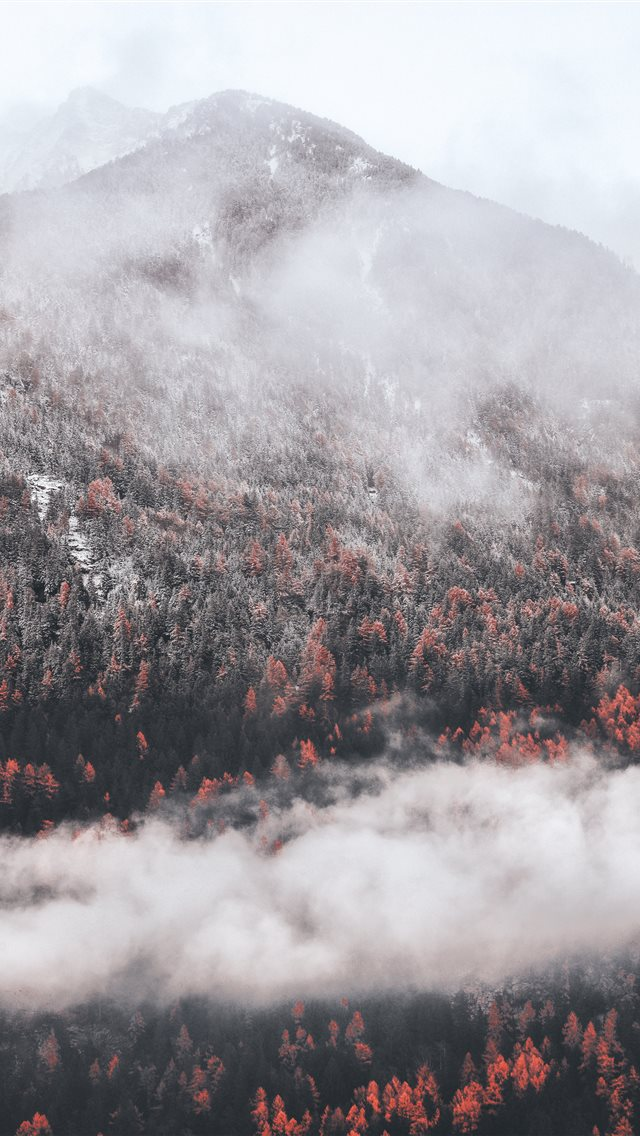 White fall iPhone wallpaper