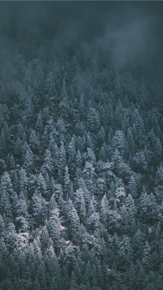 Snow Covered Pines iPhone wallpaper