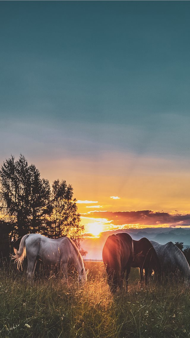 Peace on the paddock iPhone wallpaper