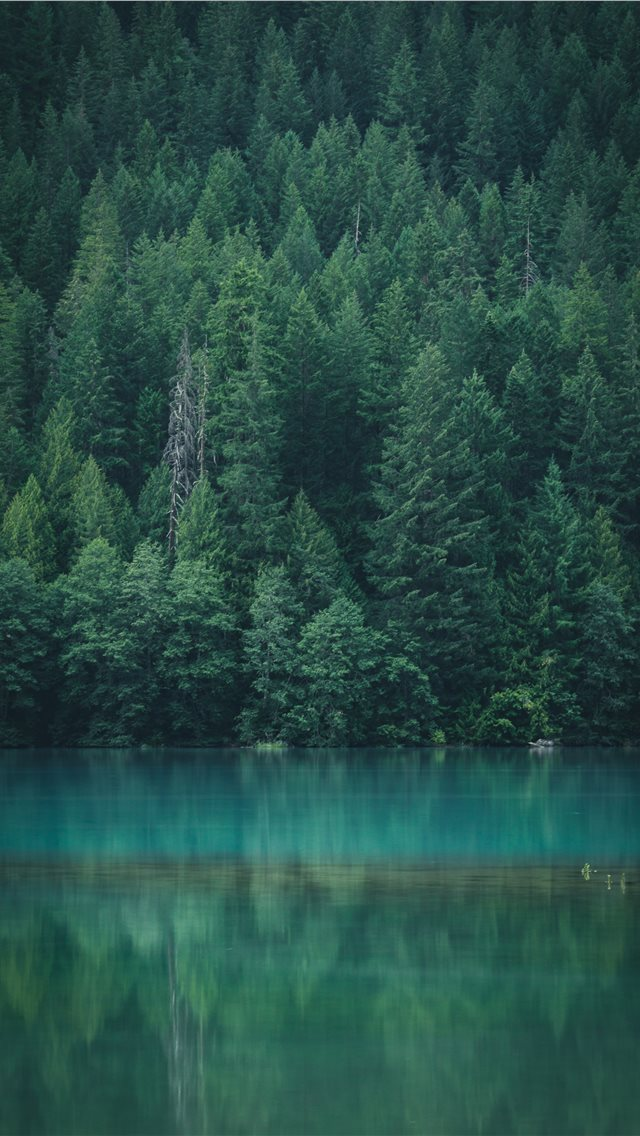 Forest reflection at Diablo Lake iPhone wallpaper