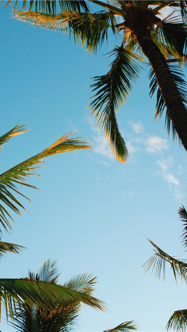 Kihei  United States iPhone wallpaper