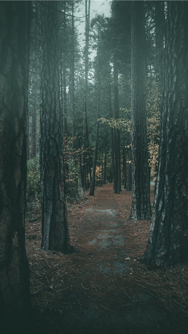Foggy walk in Yosemite iPhone wallpaper