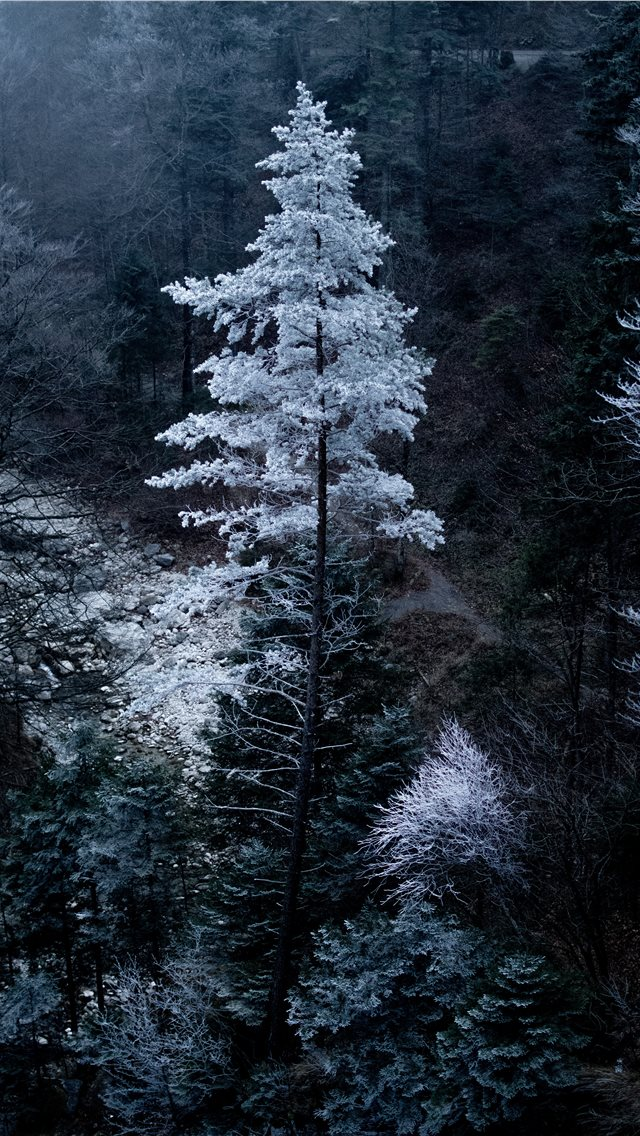 Snowy tree in Bavaria iPhone wallpaper