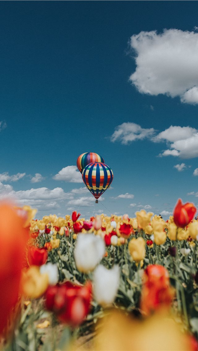 Balloon Over Tulips iPhone wallpaper