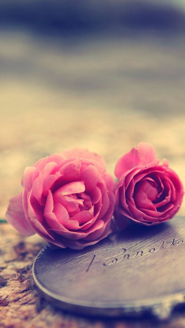 Miniature Roses iPhone wallpaper