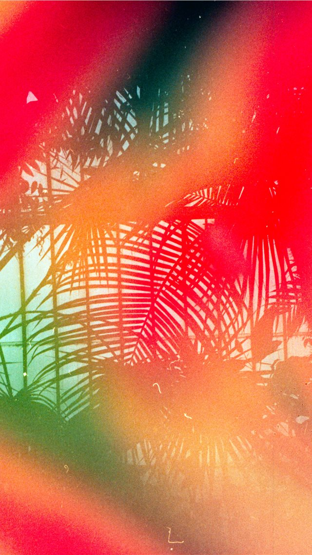 Tropical leaves   Shot on 35mm  Leica MDa with Dub... iPhone wallpaper
