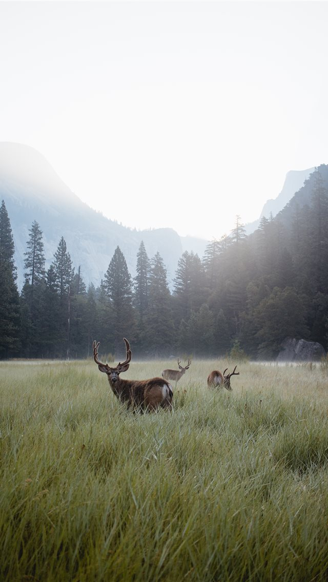 Yosemite Valley at Dawn iPhone wallpaper