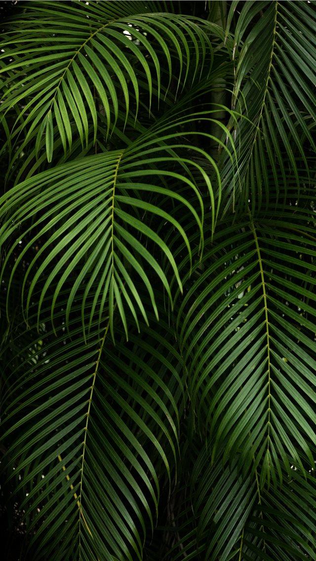 By Hector Falcon Fairchild Tropical Botanic Garden iPhone wallpaper
