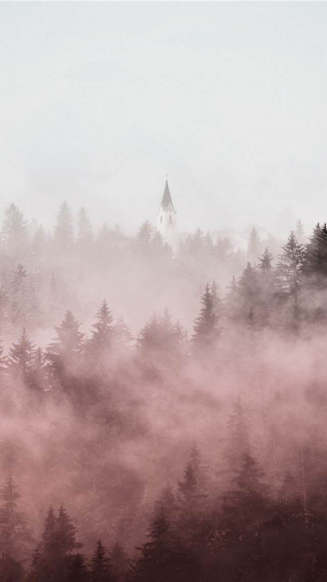 pine trees covered in fogs iPhone wallpaper