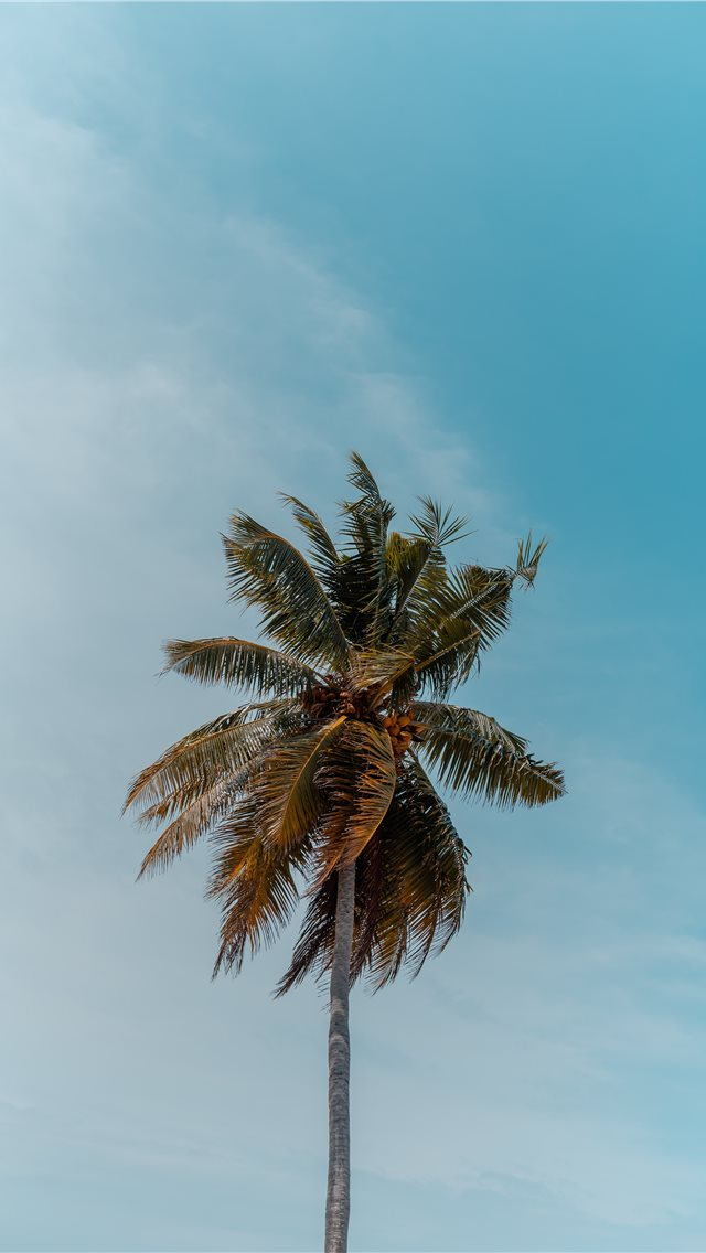 green coconut tree under blue sky iPhone wallpaper