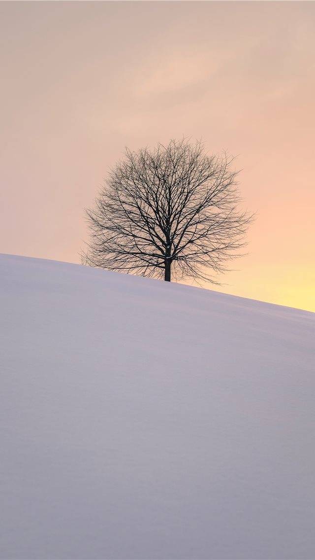 leafless tree on the hill iPhone wallpaper