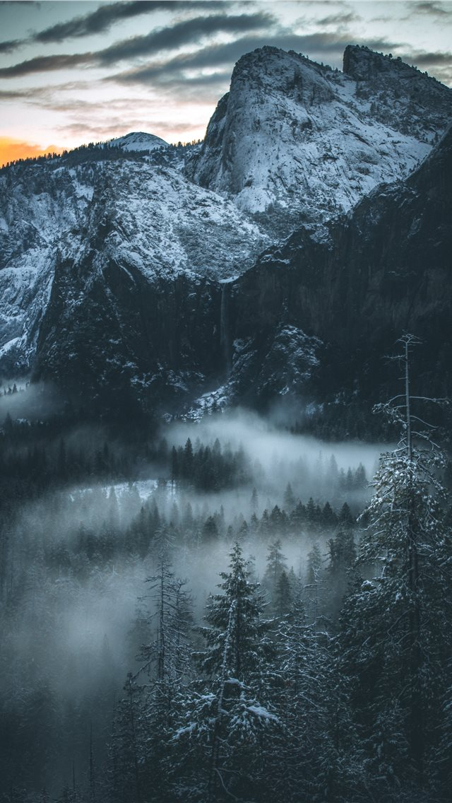 fog covered forest iPhone wallpaper