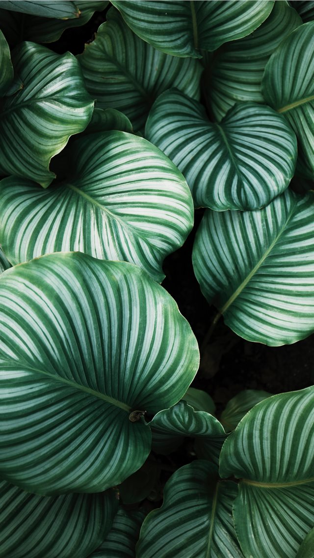 green and white leafed plants iPhone wallpaper
