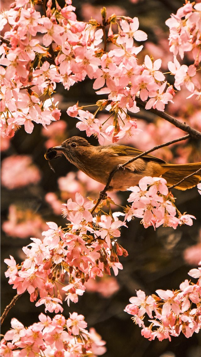 bird perching on tree during daytime iPhone wallpaper