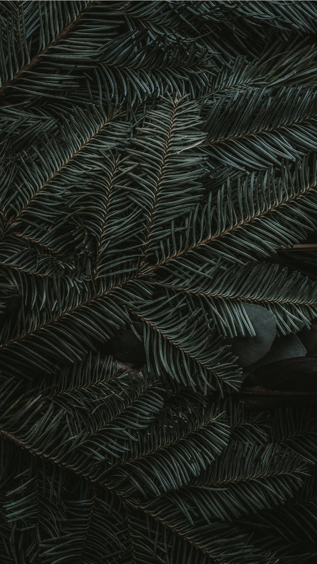 green pine tree leaves iPhone wallpaper