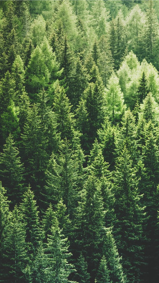 green pine trees in forrest iPhone wallpaper