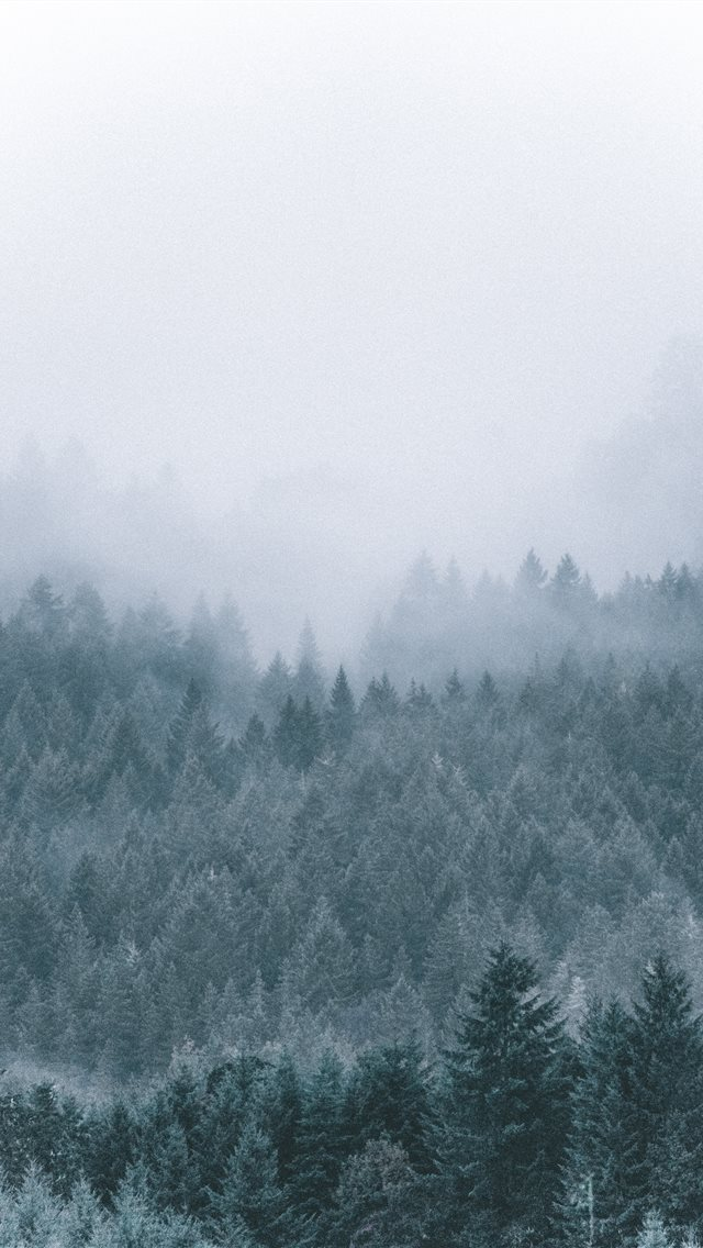 foggy icy green pine trees scenery iPhone wallpaper