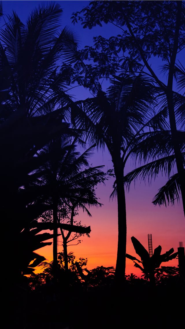 silhouette of palm trees during golden hour iPhone wallpaper