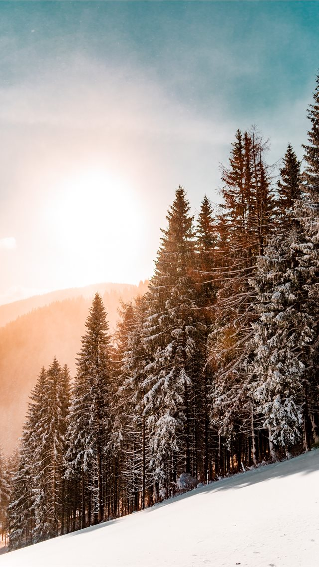 green pine trees on inclined snow mountain iPhone wallpaper