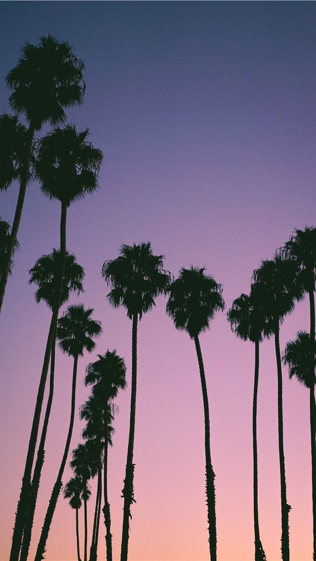 silhouette of trees during golden hour iPhone wallpaper