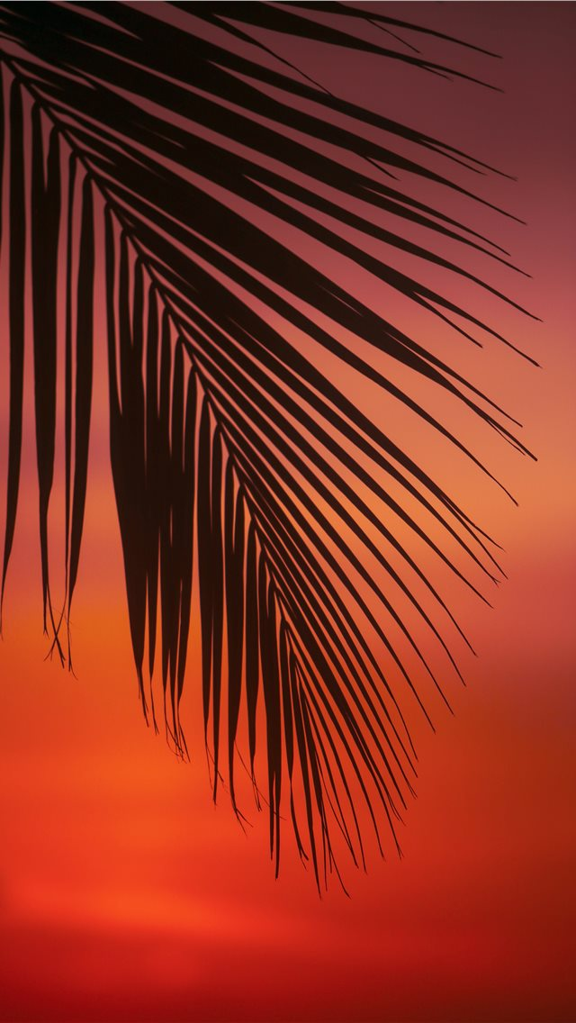 palm tree leaf iPhone wallpaper