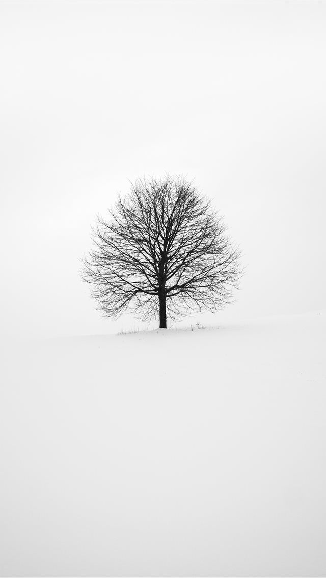 photography of tree iPhone wallpaper
