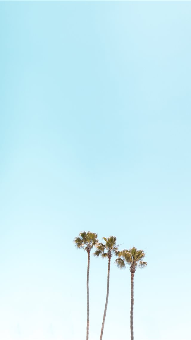 three palm trees iPhone wallpaper