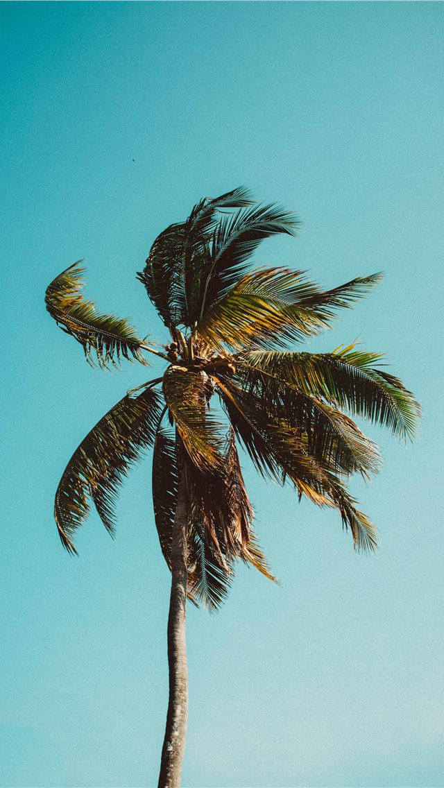 low angle photography of coconut tree iPhone wallpaper
