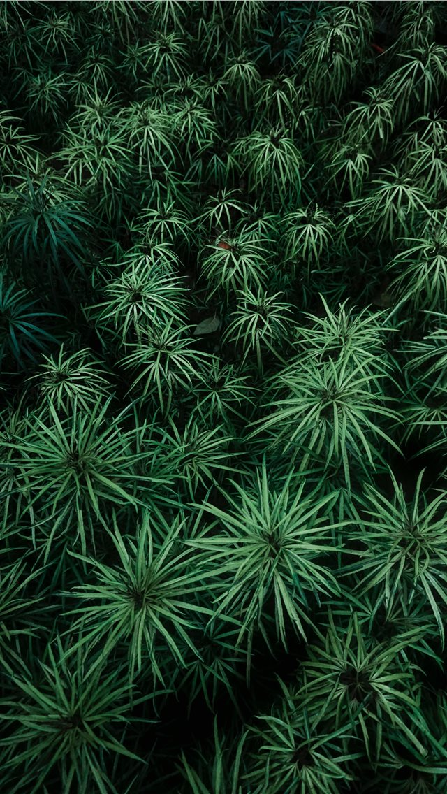 green plants at daytime iPhone wallpaper