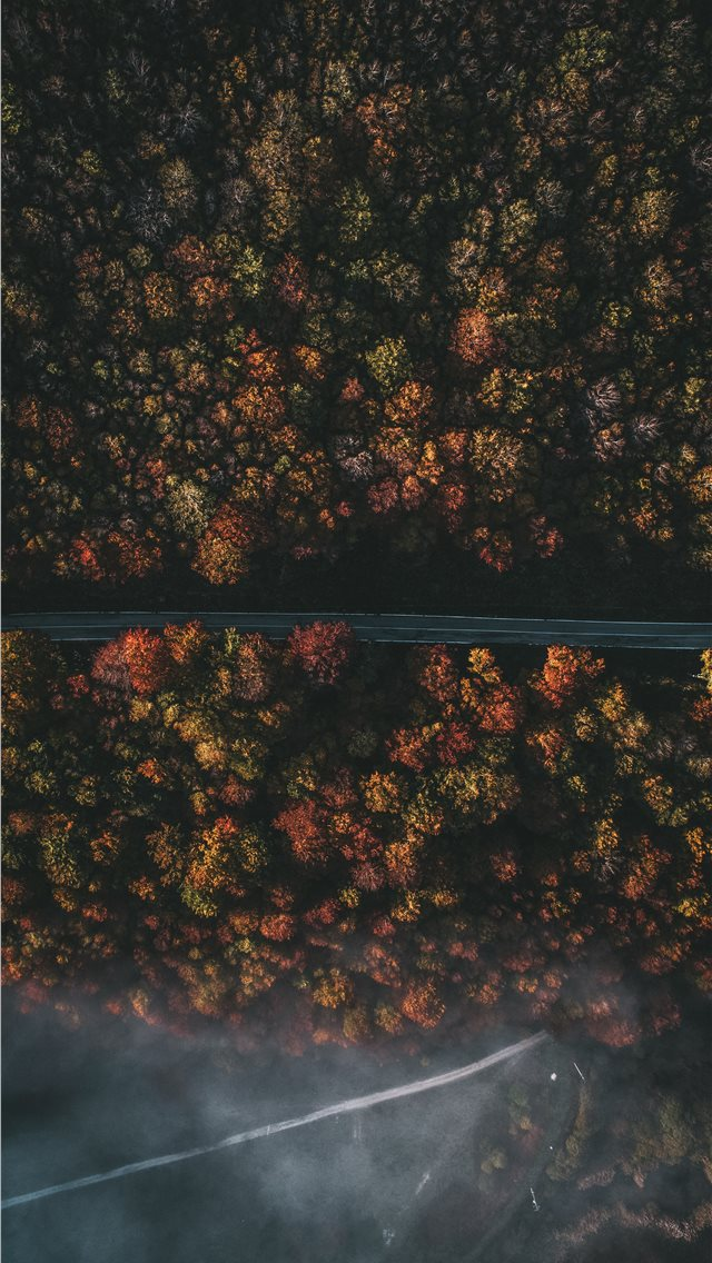 aerial photography of roadway and trees iPhone wallpaper