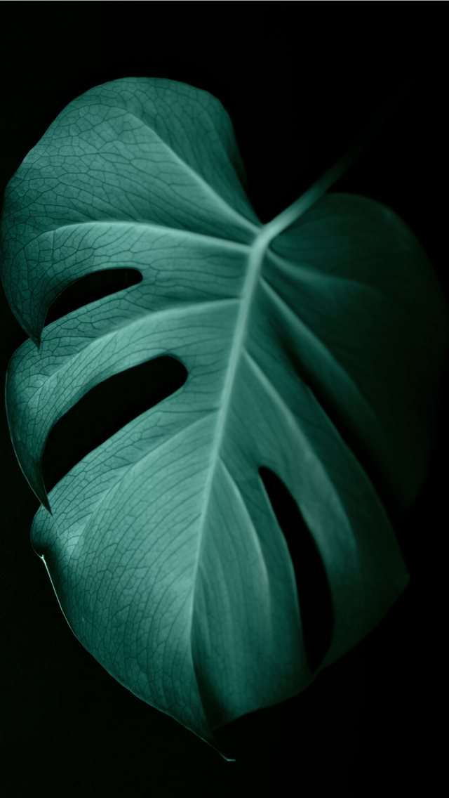 green leaf in dark surface iPhone wallpaper