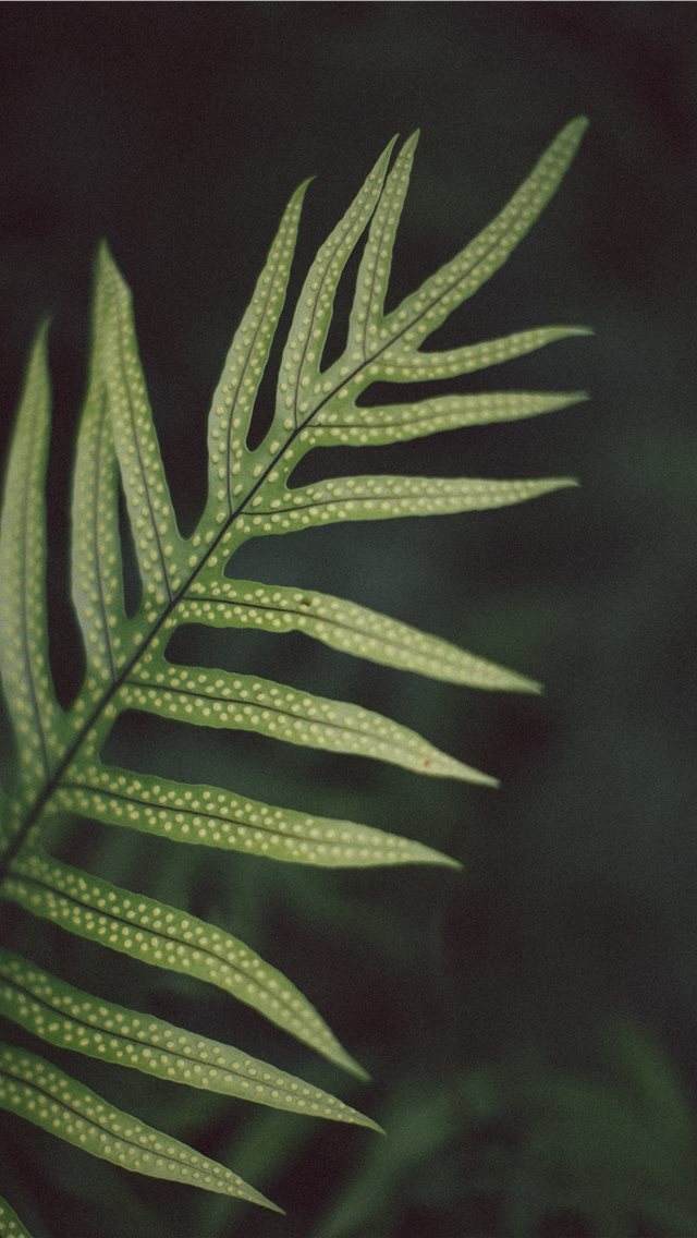 green linear leafed plant iPhone wallpaper