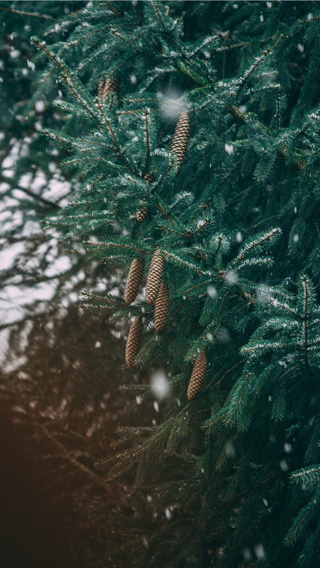 green leafed tree iPhone wallpaper