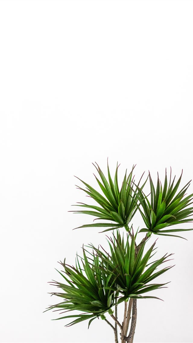 green palm plant iPhone wallpaper