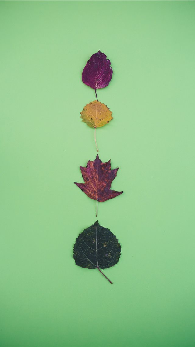 four leaves iPhone wallpaper