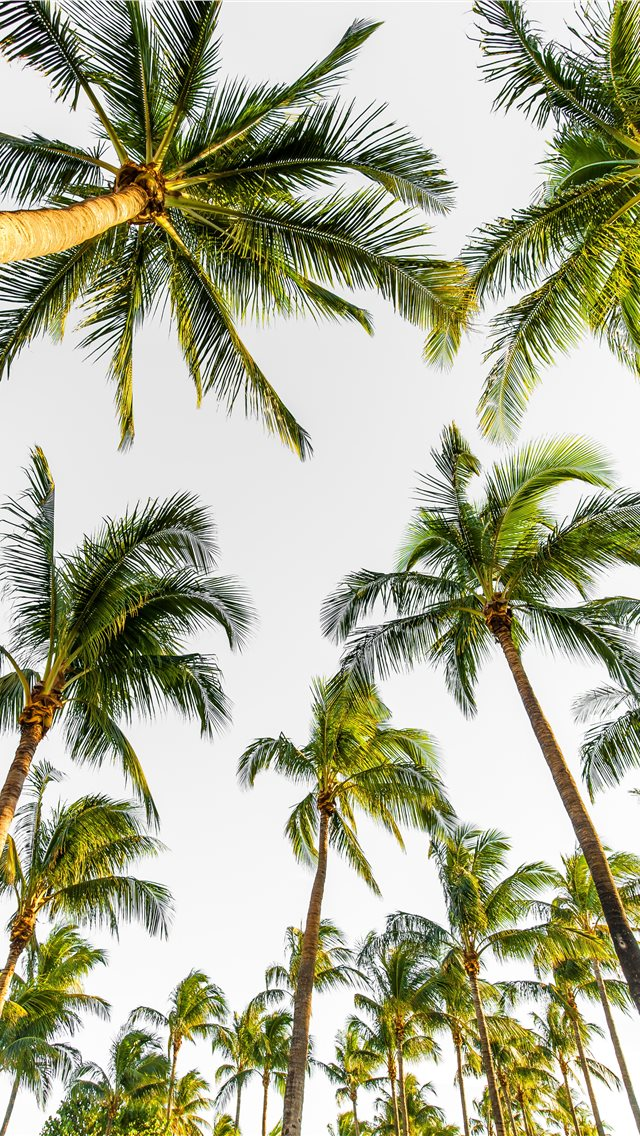 low angle photography of palm trees iPhone wallpaper
