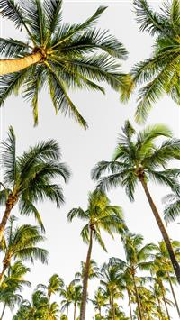 Best palm tree iPhone Wallpapers HD