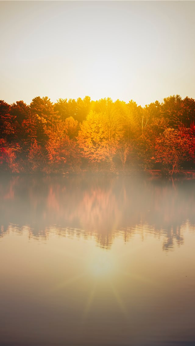 trees beside body of water during day iPhone wallpaper