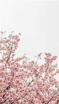 Best Floral Iphone Wallpapers Hd 2020 Ilikewallpaper