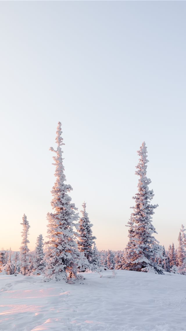 green pine trees on snow covered mountain during d... iPhone wallpaper